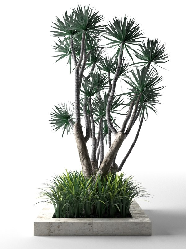palm trees grass 3D model