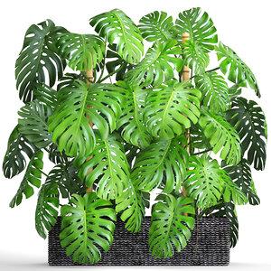 3D plants monstera