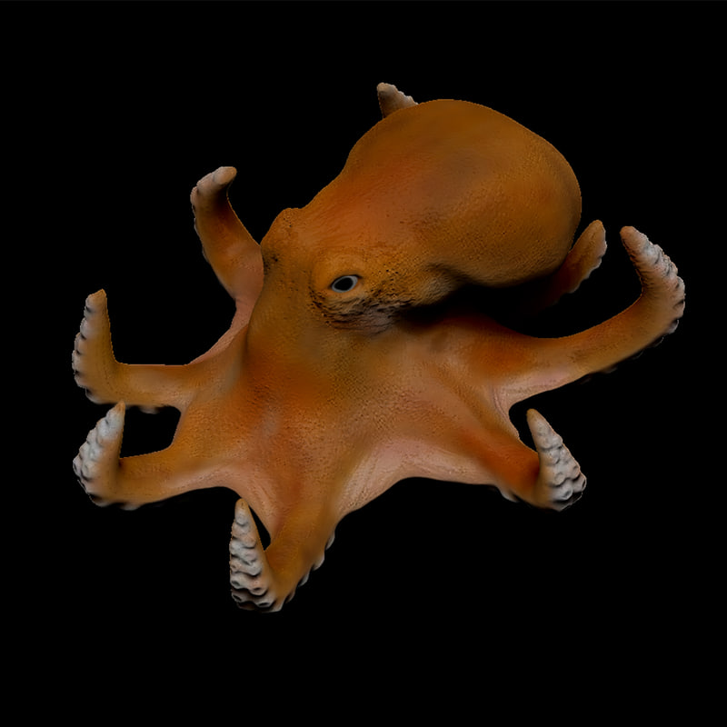 octopus polygons zbrush model