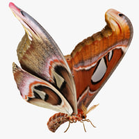 Atlas Moth Rigged 3D Model
