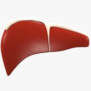 realistic liver model