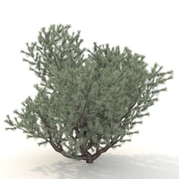 3D 3d bush model