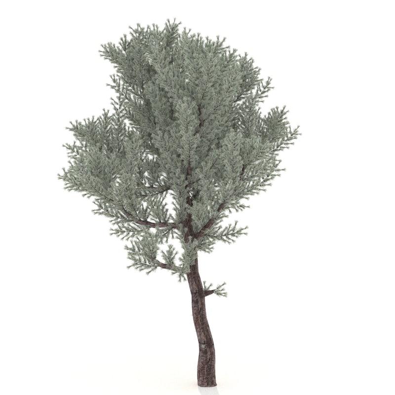 juniper 3D