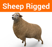 sheep rigged