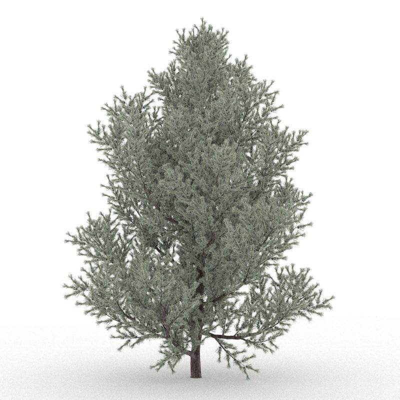 juniper modelled 3D model