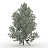 juniper modelled 3D model