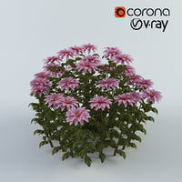 chrysanthemum model