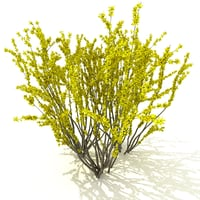 forsythia garden yellow 3D model