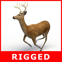 deer rigging 3D model