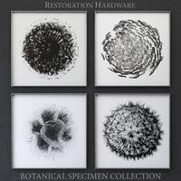 3D restoration botanical specimen model