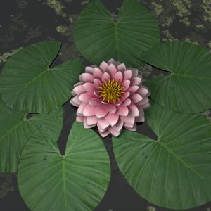 water lily 3D model