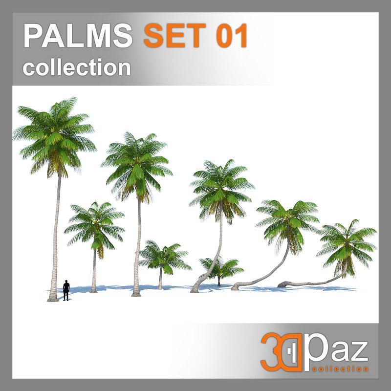 palm palmtree plant 3D model