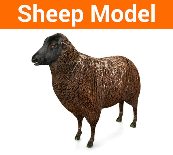 3D sheep black