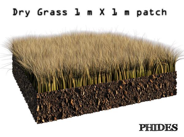 dry grass 1 3D