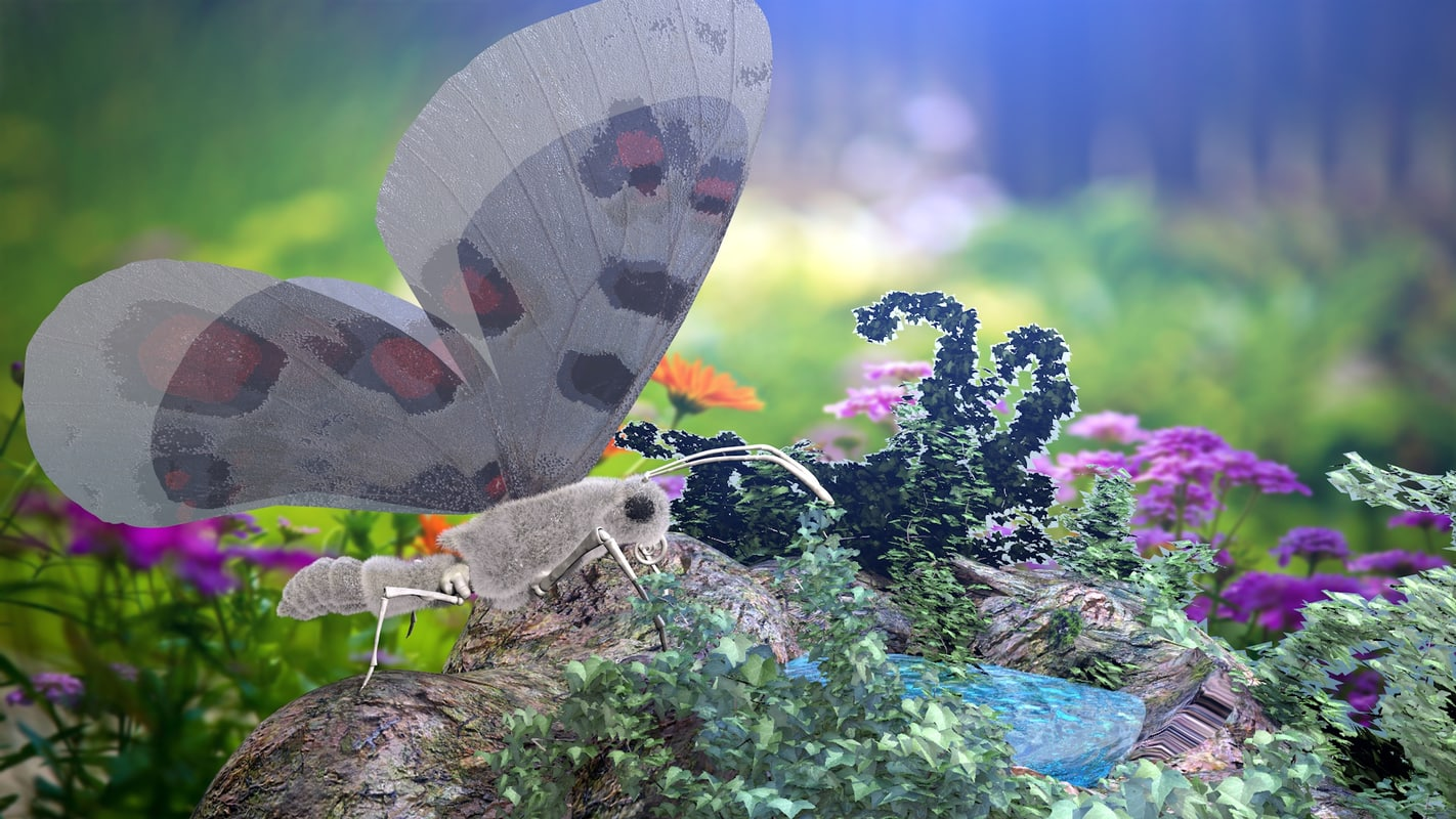 3D apollo butterfly