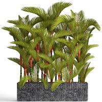 3D plants cyrtostachys renda
