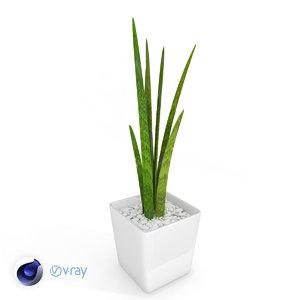 plant sansevieria 3D