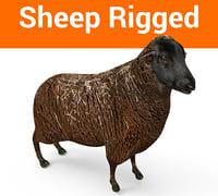 rigged black sheep 3D model
