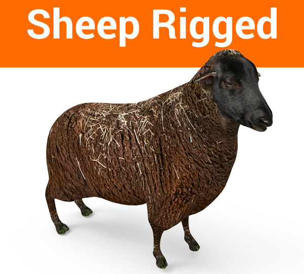 rigged black sheep 3D model