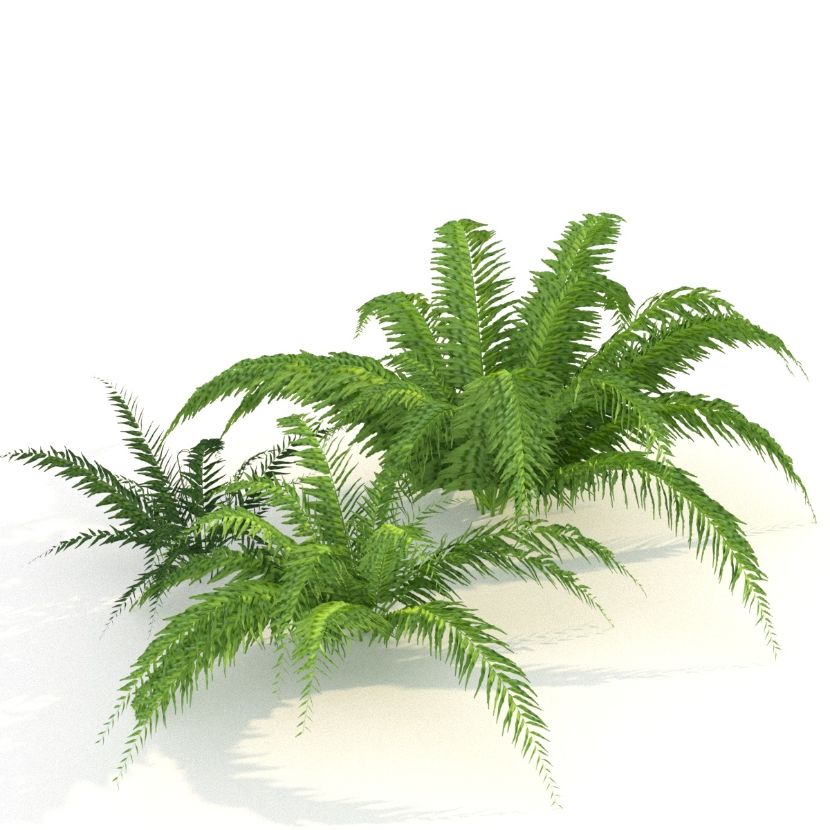 Fern Plants Model Turbosquid 1194932