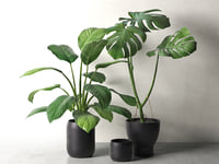 sinnerlig pots monstera peace 3D model