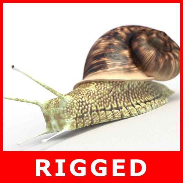 3D snail rigged model