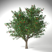 apple tree 5 model