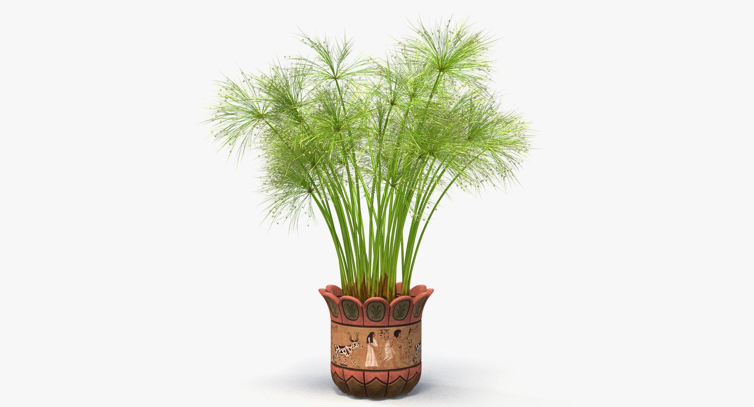 cyperus papyrus plant pot 3D model