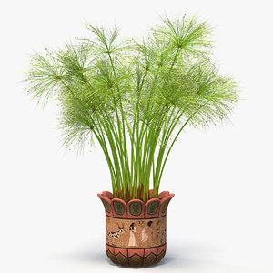 cyperus papyrus plant pot 3D model