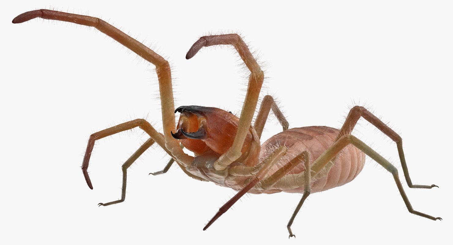 3D wind scorpion spider fur