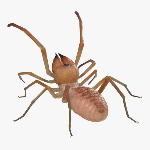 3D wind scorpion spider