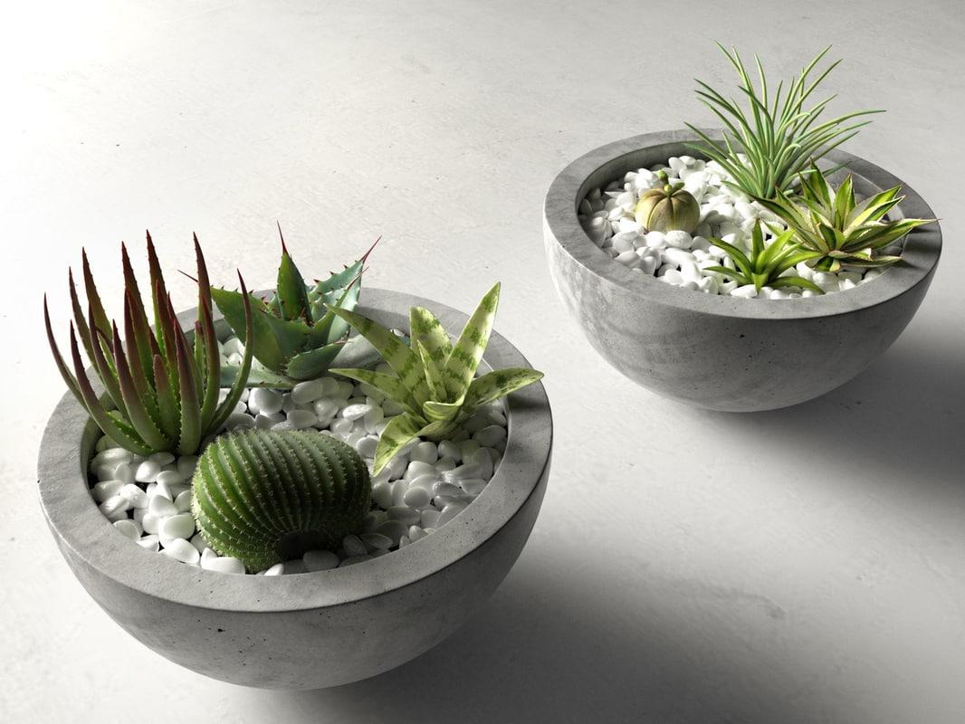 bowl planters cactus succulents model