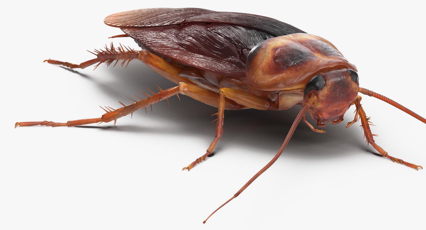 cockroach walking pose 3D