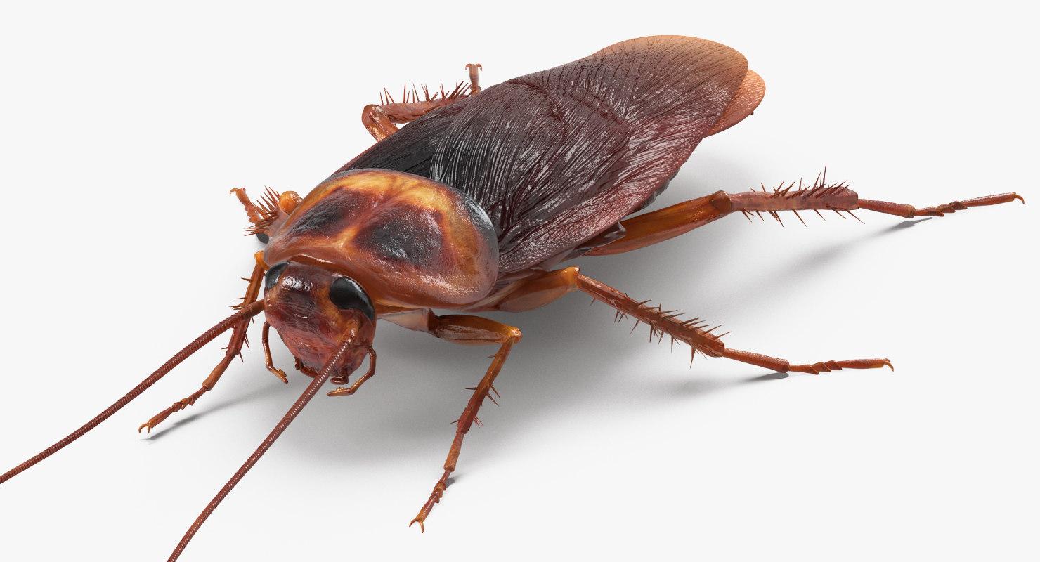 Roach Rigged Model