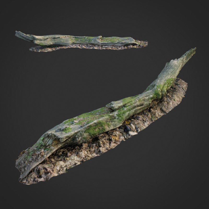 3D scanned nature forest stuff model
