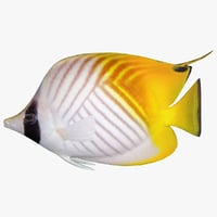 3D threadfin butterflyfish