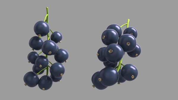 3D blackcurrant black model