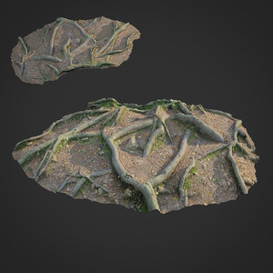 3D scanned nature forest roots