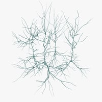 pyramidal neurons model