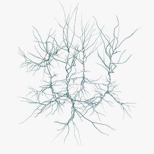 pyramidal neurons model