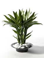 feng shui lucky bamboo plant model