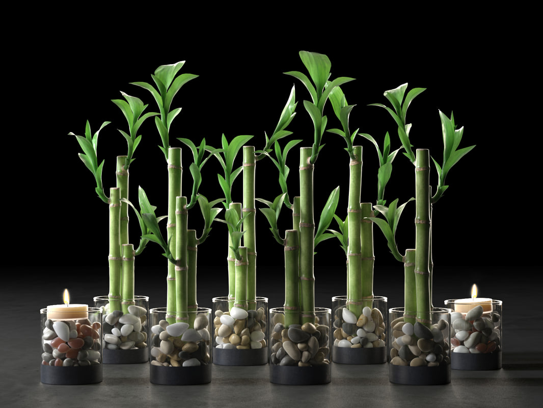 lucky bamboo centerpiece 3D model