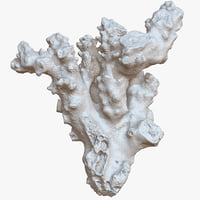 3D coral 14 raw scan model