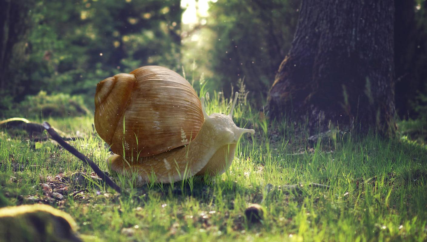 snail animation 3D