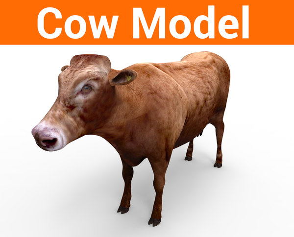 3D cow cattle