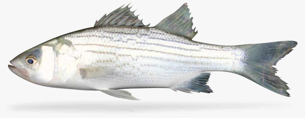 3D hybrid striped bas