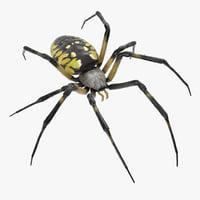 3D argiope aurantia spider rigged model