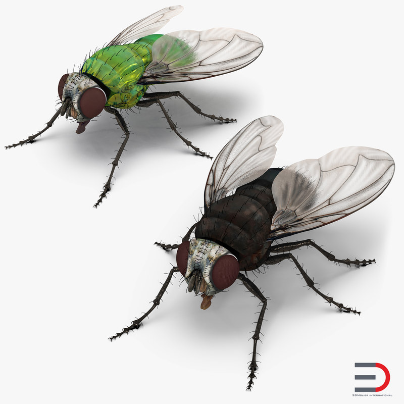 3D model flies set green