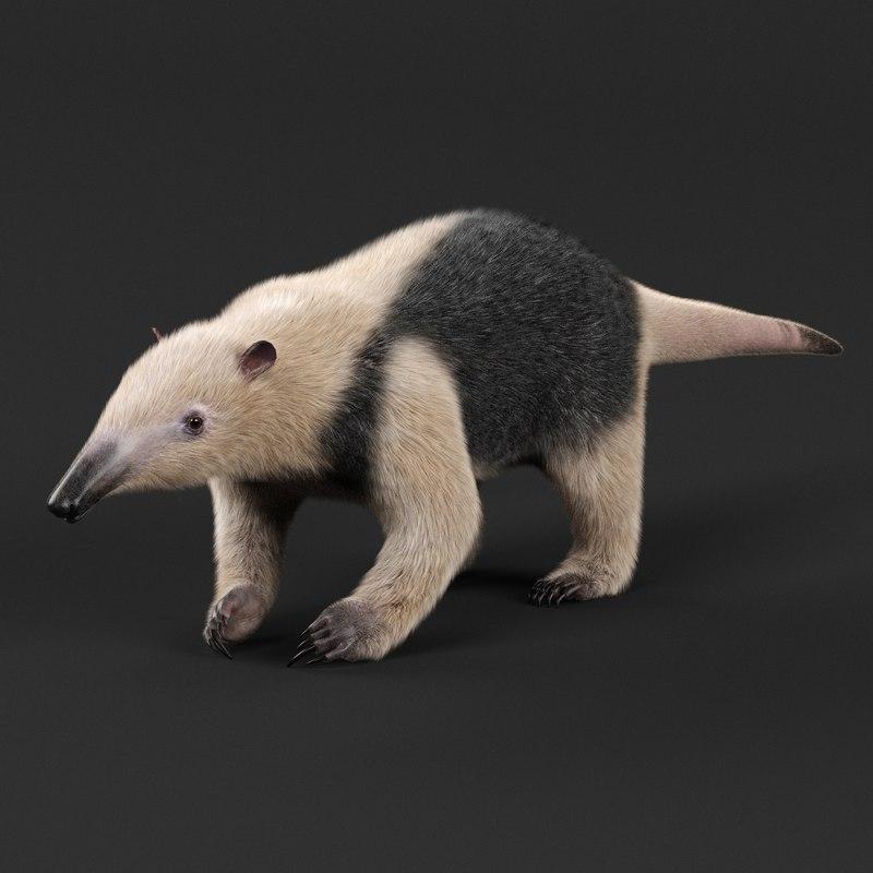 tamandua anteater 3D model