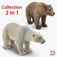 Brown and Polar Bears 3D Models Collection